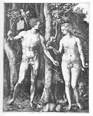 Bild Dürer: Adam und Eva